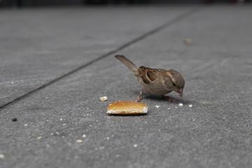 kleiner Vogel mit Brot