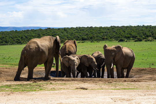 Addo Nationalpark Elefanten #1