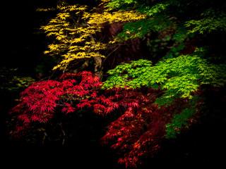 再度公園の紅葉(六甲山)