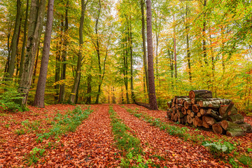 Brown and green path in the autumn forest in Poland