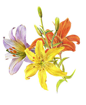 Three lily flowers orange, yellow and white. Summer garden flowers. Hand drawn watercolor lilies bouquet isolated on white background.