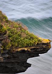mossy rock - Trebarwith Strand - Cornwall