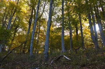 Bodetal in autumn - Harz - Germany
