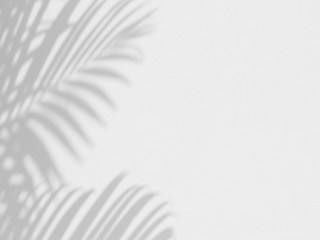 Wall Mural - shadow of palm leaves on white wall background