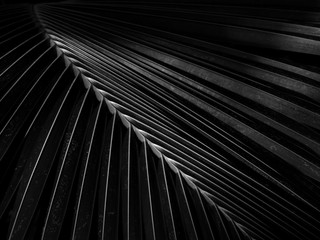 Wall Mural - black and white coconut leaf with light and shadow