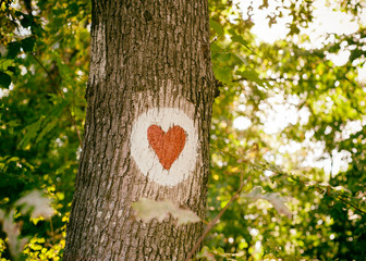 A tree in the forest with a heart painted on it, environmental concept, save the planet,