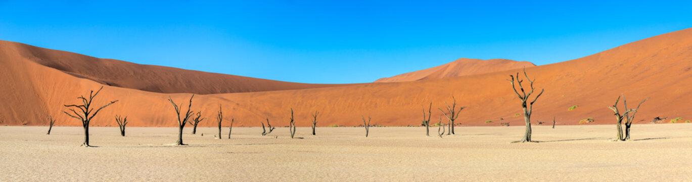 Panorama of dead acacia trees casting shadows during sunrise in arid Deadvlei pan. Sossusvlei, Namibia.
