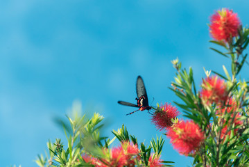 butterfly flying around yellow flower in blue sky