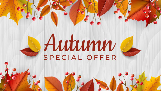 Autumn horizontal banner with fall plants, orange leaf and red berry on white wood background. Vector illustration for harvest season, autumn sale design or Thanksgiving banner