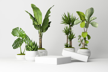 3D render of plant with white vase and product stand on white background