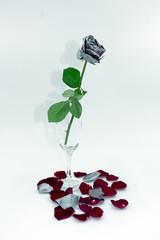vertrocknete rot-silberne Rose im Sektglas mit Schatten