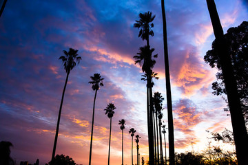 Palm Trees Line Street in Los Angeles - Silhouetted Against Colorful Clouds - 1
