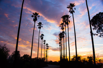 Papiers peints Palmier Palm Trees Line Street in Los Angeles - Silhouetted Against Colorful Clouds - 2