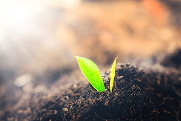 Fototapete - New life of young plant seedling grow in black soil. Gardening and environmental saving concept.