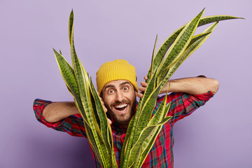 Horizontal shot of happy unshaven hipster dressed in yellow hat, plaid shirt, grows houseplant, being interested in botany, smiles gladfully, isolated over purple background. Florist with sansevieria