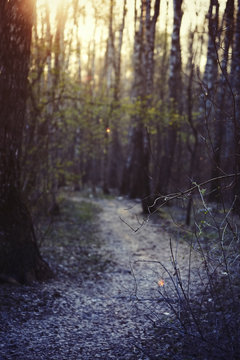 Photo of a blurry evening mystical forest. Lonely track goes into the distance. Magical mystical story