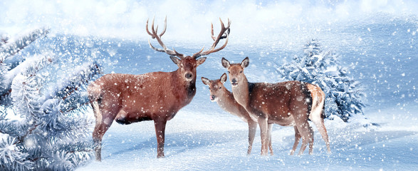 Wall Mural - Family of noble deer in a snowy winter forest. Christmas artistic image. Winter wonderland. Banner format.