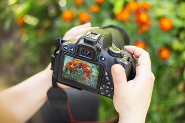 Making flowers photos and video. Camera on hands closeup