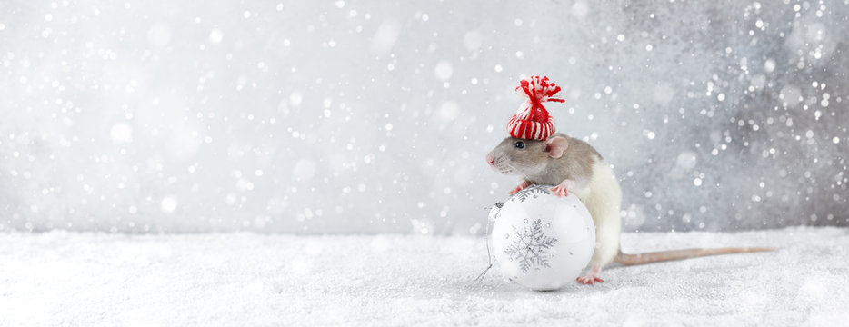 Rat in winter hat holding glass ball decoration
