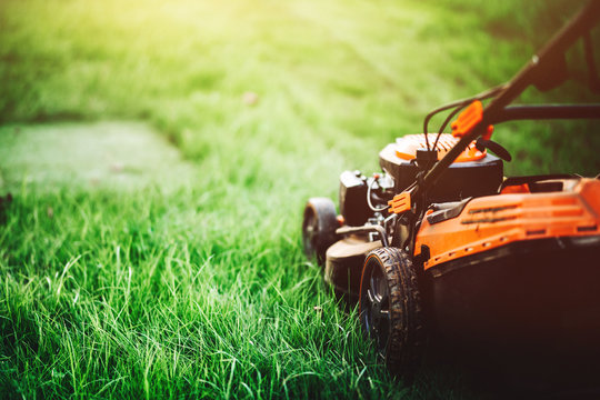 cutting the grass in backyard. Gardening and landscaping concept