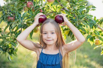 Child picking apples on farm in autumn. Little girl playing in apple tree orchard. Healthy nutrition.