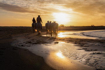 Spoed Foto op Canvas Chocoladebruin Horses in Camargue