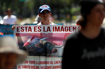 An animal rights activist takes part in a march during a demonstration against bullfighting events and animals circuses, along Reforma Avenue in Mexico City
