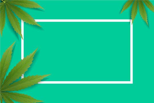 Cannabis leaves or marijauna medical poster design.