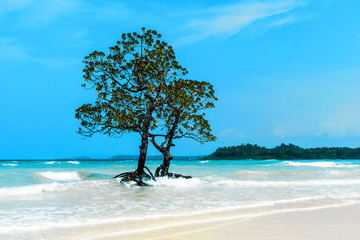Mangrove tree islet viewed from the water surface,