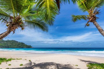 Wall Mural - Palm trees on Sunny beach and turquoise sea in Seychelles. Summer vacation and tropical beach concept.