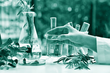 Medicinal herbal plant analysis, Natural organic botany drug research and development, Scientist hand holding glass beaker with essence, Alternative holistic herb extraction medicine.