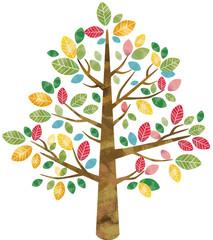 カラフル 大木 樹木 木 自然 秋 春 夏 葉 森