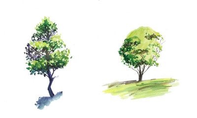 Tree watercolor sketching on white background