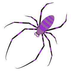 蜘蛛 ジョロウグモ イラスト クリップアート
