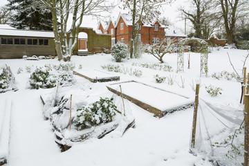 Vegetable garden in winter snow