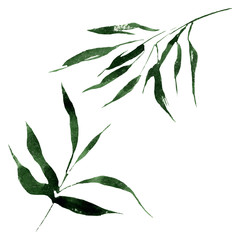 Bamboo green leaves and stalks. Watercolor background illustration set. Isolated bamboo illustration element.