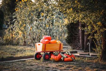 Kürbis, ernte, Kürbise, herbst, Halloween, Hintergrundbild, Garten