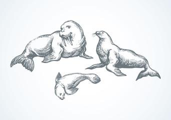 Walrus. Vector drawing Wall mural