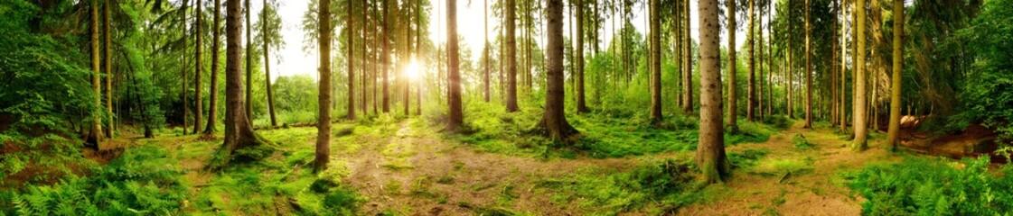 Wald Panorama mit heller Sonne, die durch die Bäume scheint