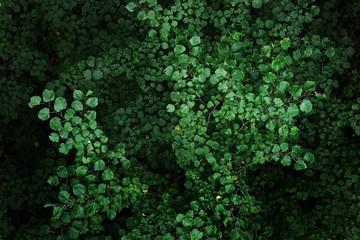Tree leaves pattern