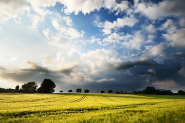 Fresh lush green meadow against cloudy dramatic sky on a summer evening with a dramatic sky Wall mural