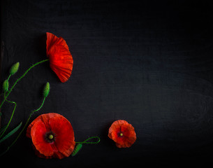 Foto op Canvas Poppy Bouquet of red poppies and white Spiraea on a black background. Wild flowers.