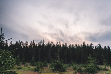 Poster Morning with fog Natural green forest of spruce trees with beautiful cloudy sky in Sumava, Czech Republic