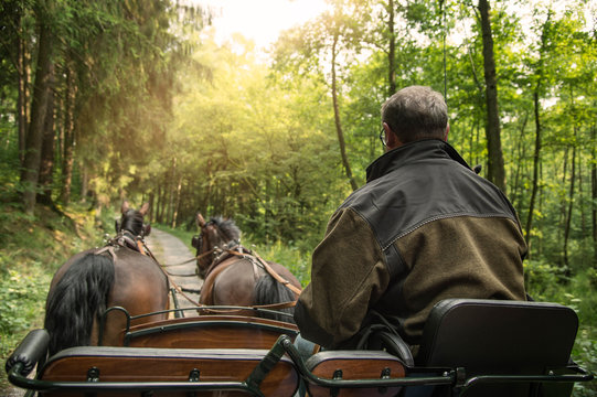 A man drives a carriage with two horses (Saxon Thuringian heavy warm blood). The ride is on a forest path. Sun shines through the treetops.