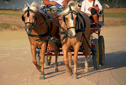 ponies pulling a 4-wheel cart
