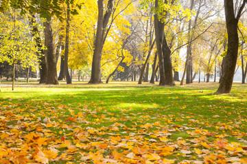 Beautiful Nature Autumn landscape city park