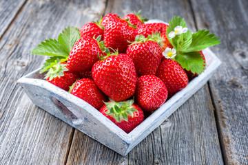 Frische rote Erdbeeren angeboten als closeup in einem Shabby Chic Tablet aus Holz mit Textfreiraum
