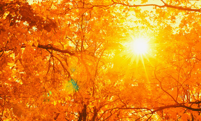 Sun rays seen through tree brances in autumn park. Fall concept