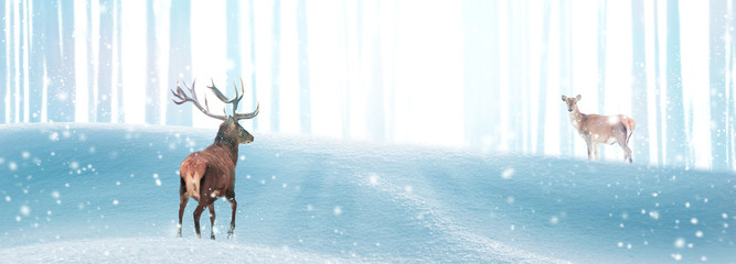 Fototapete - Red deer in a winter magic forest in the rays of light. Christmas fantastic banner. Free space for text. Winter wonderland.