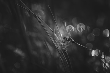 dragonfly black and white picture